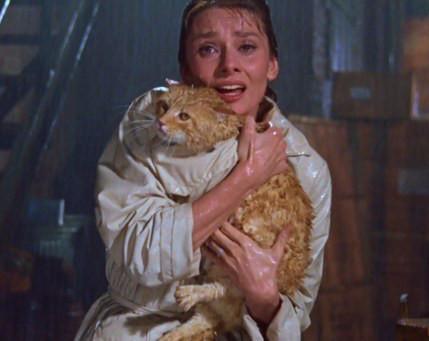 gatto-Audrey-Hepburn