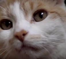gatto-beve-rubinetto