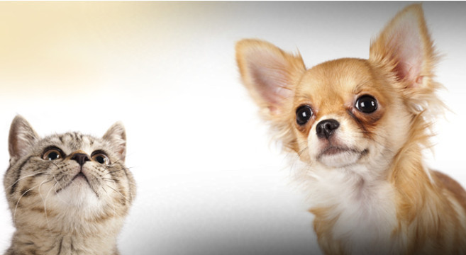Cane e gatto
