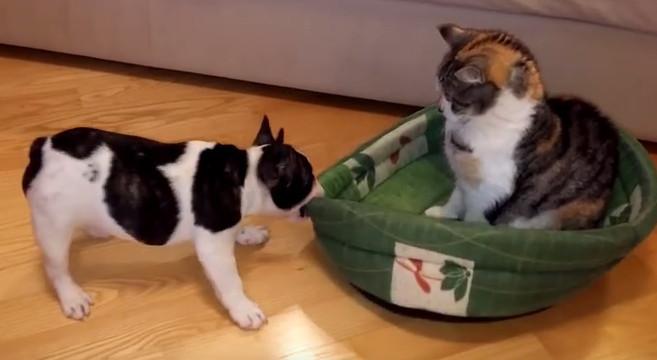 Video Di Un Cane Un Gatto E La Cuccia