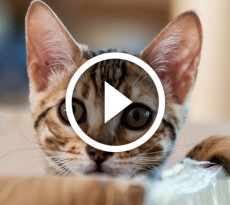 gatto-scatola-video