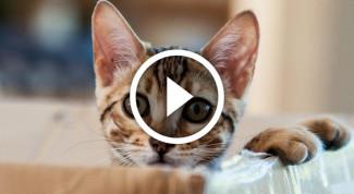 gatto-scatola-video