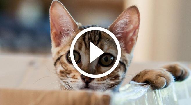 Video Divertente Di Gatti E Cani Che Giocano Tra Loro
