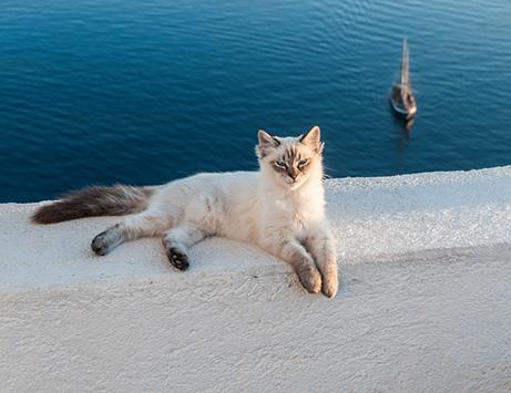 gatto in vacanza