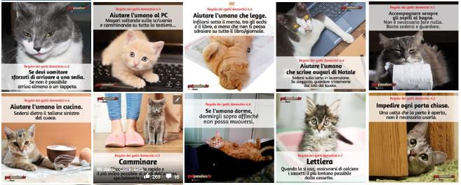 regole-gatto-domestico
