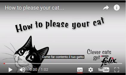 video-gatto-contento