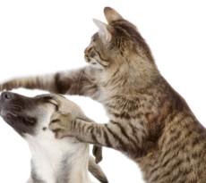 cane-gatto-assicurazione