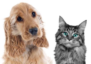cane-gatto-foto