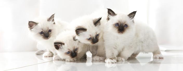 Alimentazione gattino