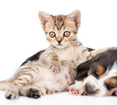 Cane e gatto: iniziative di ottobre