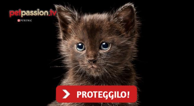 Gatti Neri Come Difenderli Dai Pericoli Di Halloween