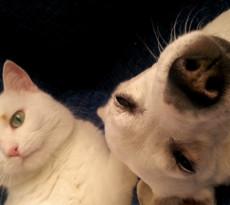 Cane gatto premi