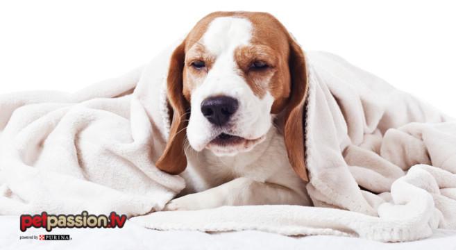 cane raffreddore