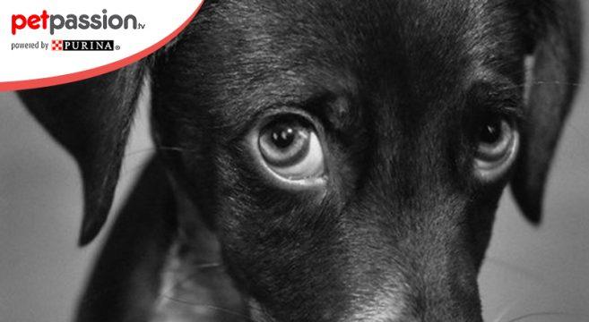 Perchè Il Cane Mangia Le Sue Feci 5 Possibili Cause