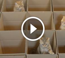 gatti-scatole-video