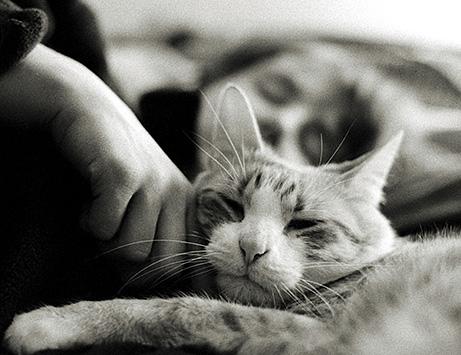 Gatto e coccole