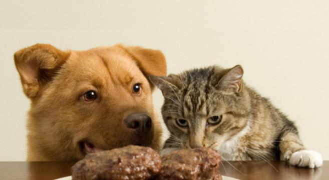 Cibo Vietato Che Fa Male A Cani E Gatti