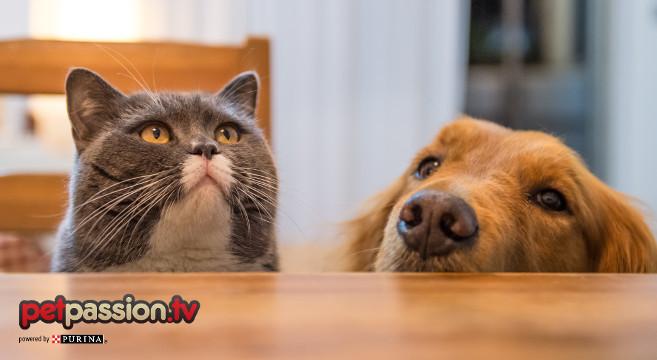 cibo cane e gatto