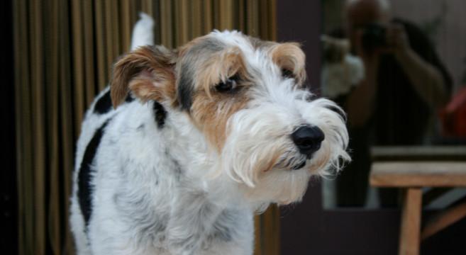 Il Cane è Diventato Vecchio 12 Segnali Di Invecchiamento