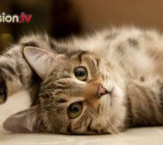 foto-gatto