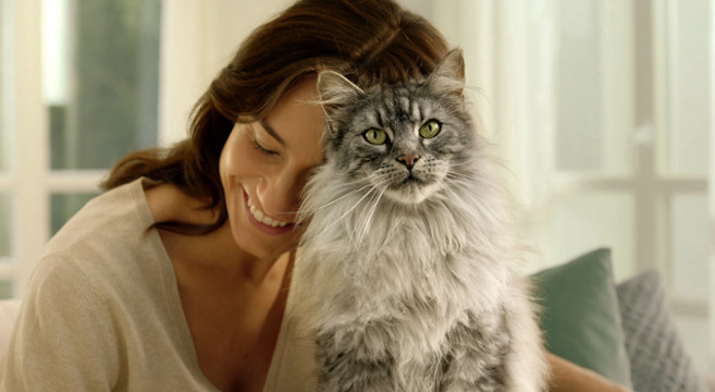 Sistema immunitario gatto