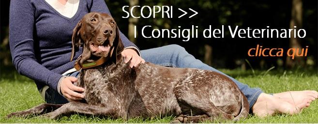 banner consigli veterinario