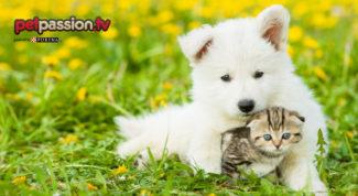 cane-gatto-processionaria