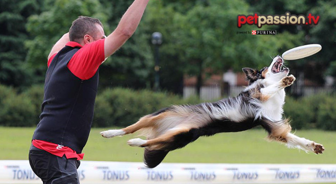disc-dog-video-lezioni