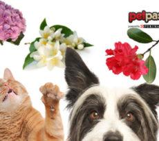 piante-pericolose-cane-gatto