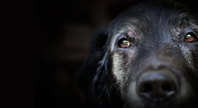 cane-anziano