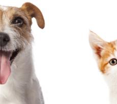 cane-gatto-intelligenza