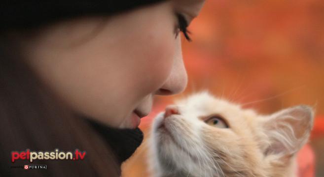 Calendario Eta Gatti.Come Calcolare L Eta Dei Gatti In Anni Umani Petpassion
