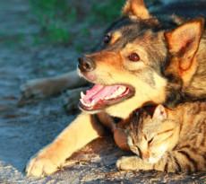 cane-gatto-caldo