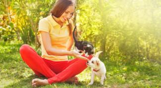 cane-gatto-famiglia