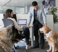 cani in ufficio