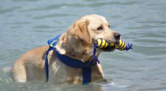 spiagge per cani in Lombardia