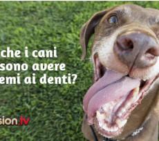 Cane problemi denti