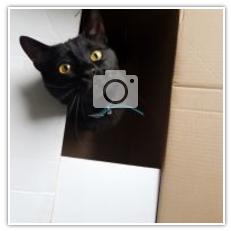 Un Gattino Rosso Un Gattino Nero E Un Sogno Realizzato