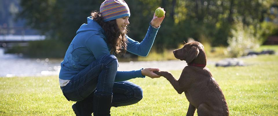metodi-addestramento-cane