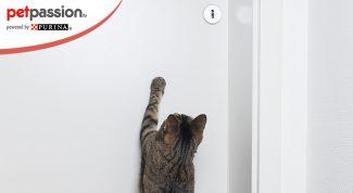 Perchè il gatto gratta la porta