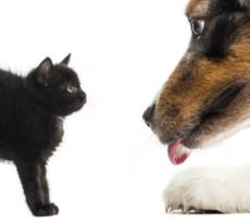 cane-gatto-pericoli-halloween