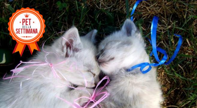 gattini-cuccioli