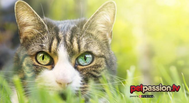 curiosità-gatto