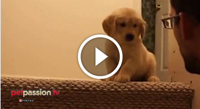 cucciolo-scale-video