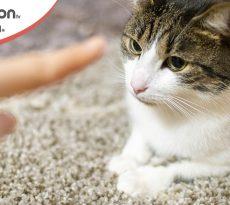 Come addestrare gatto