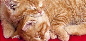 sonno-gatto