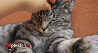 gatto-morde-graffia