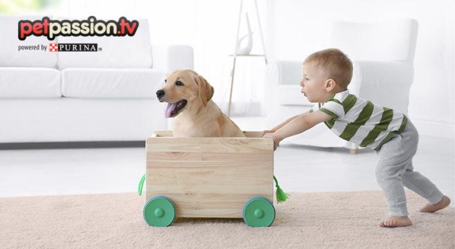 Convivenza bambini e cani