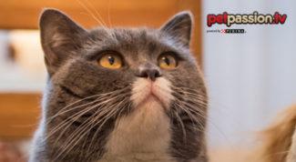 gatto-problemi-salute