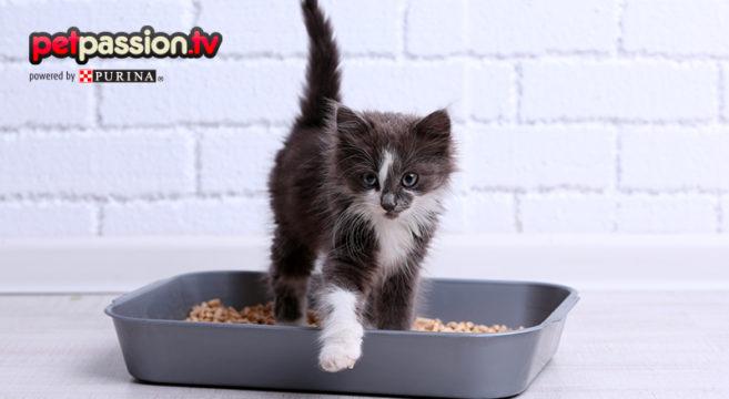 Quale Lettiera Preferiscono I Gatti